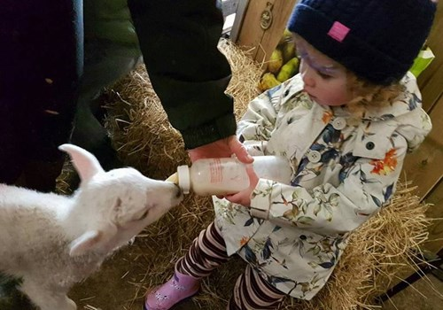 Girl Bottle Feeding Lamb