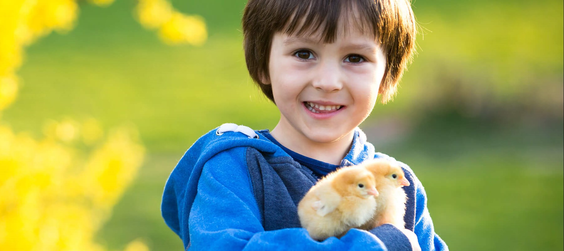 Boy holding Chicks